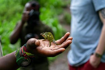 Foto op Canvas Kameleon chamäleon in der Hand