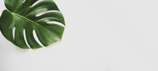 Monstera leaf background panoramic. Tropical jungle palm leaves on pastel background. Copy space. summer minimal background flat lay, view from top