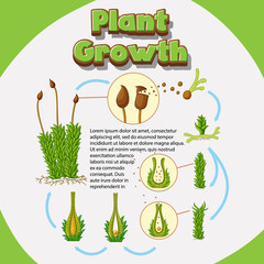 Diagram showing how plants grow from seeds