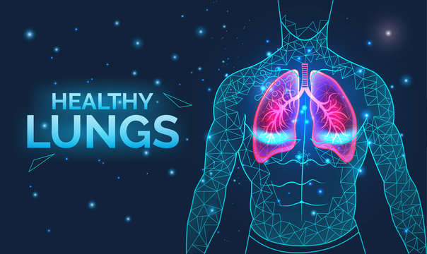 Healthy lungs, respiratory system, disease prevention, banner with human body organs, anatomy, breathing and healthcare, vector illustration.
