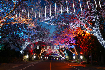 Papiers peints Marron 제주의 아름다운 벚꽃길 야경이다.