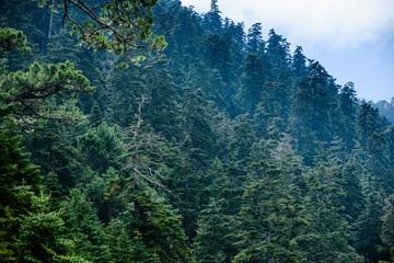 Photo sur Aluminium Jungle Natural Site of Reales de Sierra Bermeja, Genalguacil, Malaga, Spain