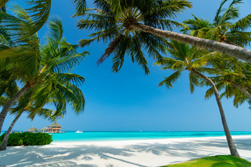 Garden Poster Trees Sandy beach of tropical island in the Maldives