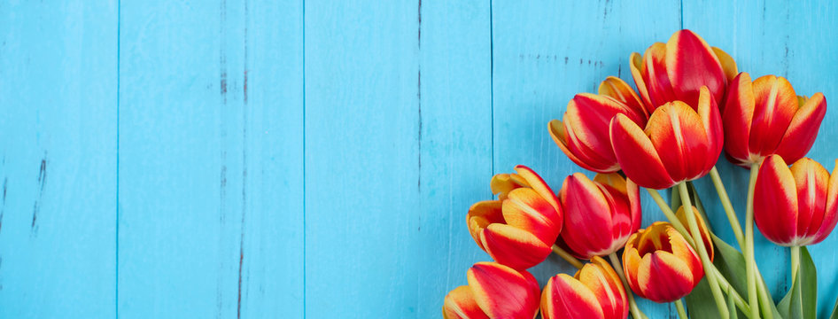 Tulip flower bunch, Mother's Day Design Concept - Beautiful Red, yellow bouquet isolated on blue wooden background, top view, flat lay, copy space