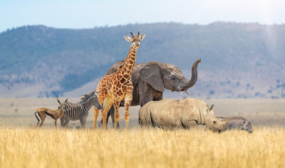 Wall Mural - Baby Safari Animals Together in African Grasslands