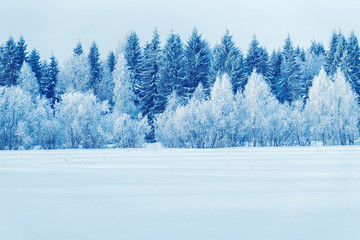 Printed kitchen splashbacks Light blue Snowy trees in countryside at winter Rovaniemi