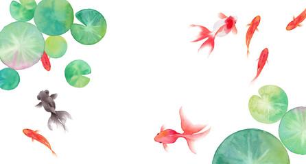 金魚と睡蓮の葉で構成した夏のイメージ背景、水彩イラスト