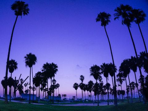 Purple in the sky