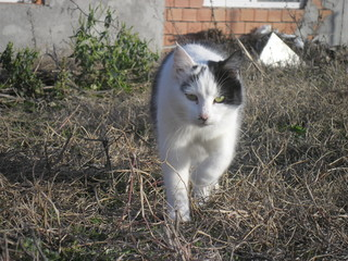 cat animal pet kitten white cute outdoor