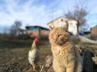 cat kitten animal pet