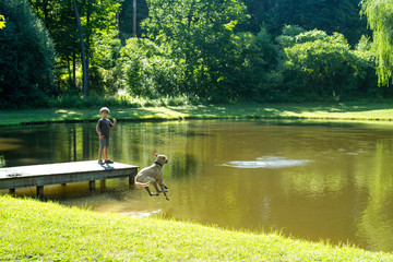Dog jumping in a pond to retrieve ball
