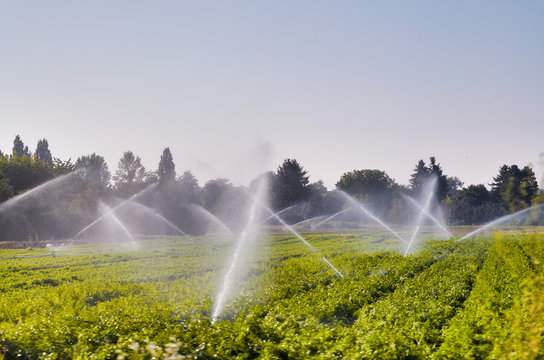 Irrigation system in function, watering agricultural plants in summer season