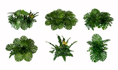 Papiers peints Hortensia Green leaves of tropical plants bush (Monstera, palm, rubber plant, pine, bird's nest fern) floral arrangement indoors garden nature backdrop isolated on white background thailand,
