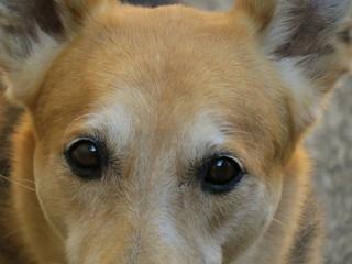Olhar canino Fotobehang