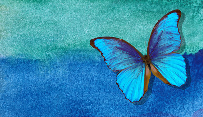 Fotorolgordijn Vlinders in Grunge Bright morpho butterfly on abstract blue watercolor background. Wet watercolor paper texture background. blue watercolor stains.
