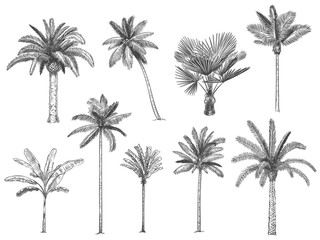 Hand drawn tropical palm trees. Vector set of hawaii beach palm tree, fern and frond outline, botany flora tropical illustration - fototapety na wymiar