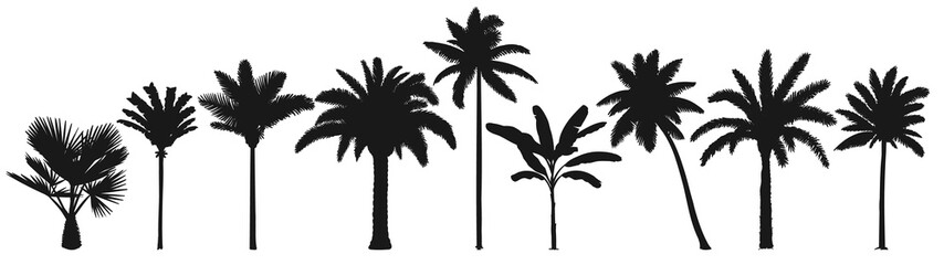Wall Mural - Palm trees silhouette. Retro coconut trees, hand drawn tropical palm silhouettes vector set. Illustration palm tree botany, green tropical plants