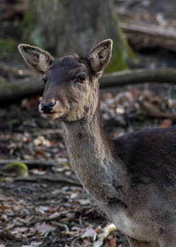 Deer in forest park watching me