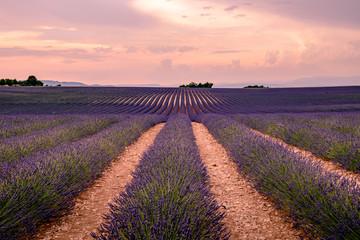 Abendstimmung in einem Lavendelfeld in Valensole Provence