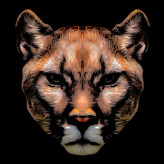 angry, animal, background, beautiful, bengal, big, black, cat, danger, face, feline, fur, head, hunter, jungle, mammal, nature, portrait, predator, puma, siberian, striped, tiger, white, wild, wildcat