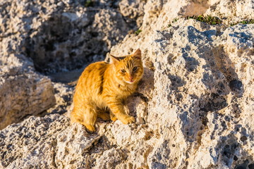 beautiful Cypriot cat sitting on a rock in Ayia Napa, Cyprus