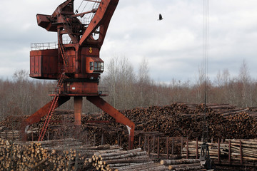 A view shows stacks of logs stored at the Syassky Pulp & Paper Mill in Syasstroy