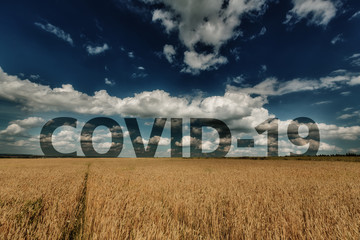 Wheat ears and cloudy sky with word COVID-19 at horizon Fototapete