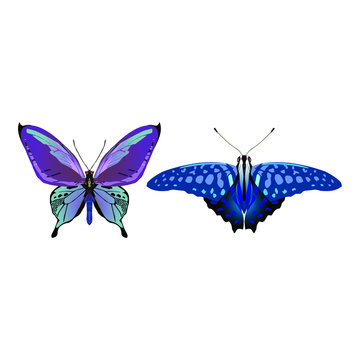 Tropical butterflies set. Vector isolated elements on the white background