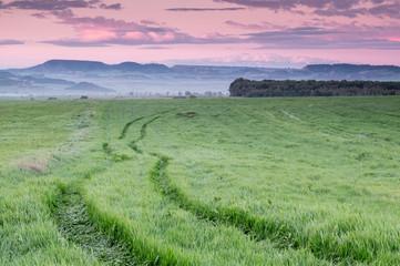 Spoed Foto op Canvas Olijf Paisaje de campo de cultivos al amanecer.