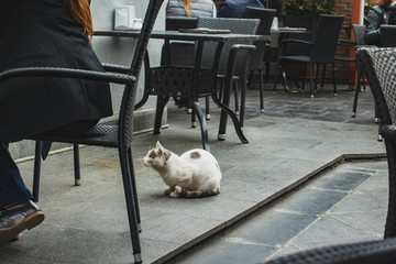 A cat sits in a cafe and begs for food