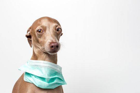 dog with coronavirus protection mask