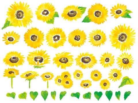 水彩ひまわりセット-Watercolor sunflower