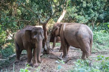 Elephants under three