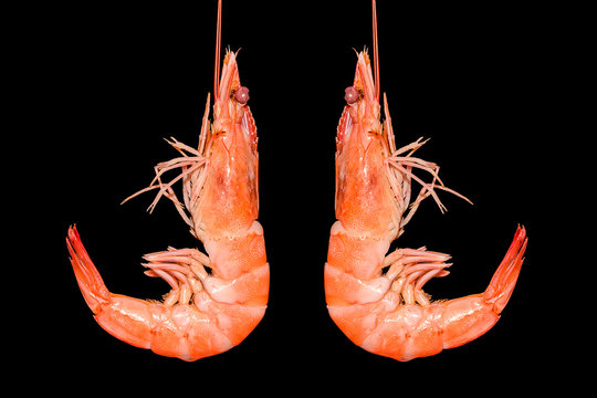 isolated grilled shrimp on black background