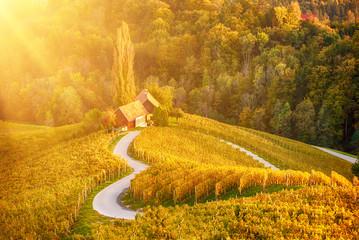 Canvas Prints Honey Heart shaped wine road in Slovenia