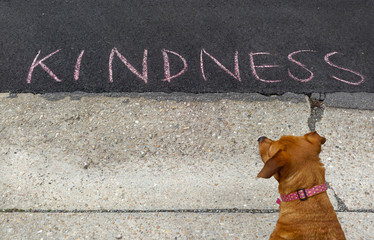 Brown dog appears to be contemplating KINDNESS message written on asphalt. Fun. Humor.