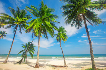 Fototapete - beautiful tropical beach with coconut palm trees