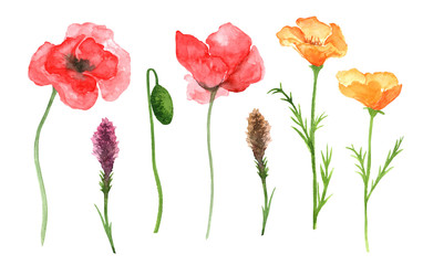 Watercolor wildflowers isolated on white background. Watercolor flowers isolated set. Botanical illustrarion.  Floral hand drawn watercolor illustration. Poppies flowers set