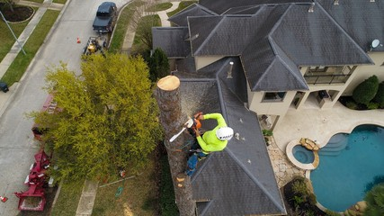 Arborist Removing a tree with a chainsaw