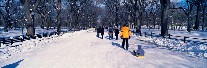 Fototapete - Panoramic view of walker pulling sled with child on fresh snow in Central Park, Manhattan, New York City, NY in winter
