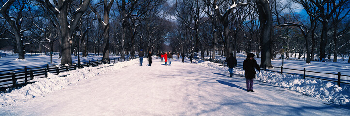 Wall Mural - Panoramic view of pedestrians walking on fresh snow in Central Park, Manhattan, New York City, NY on a sunny winter day