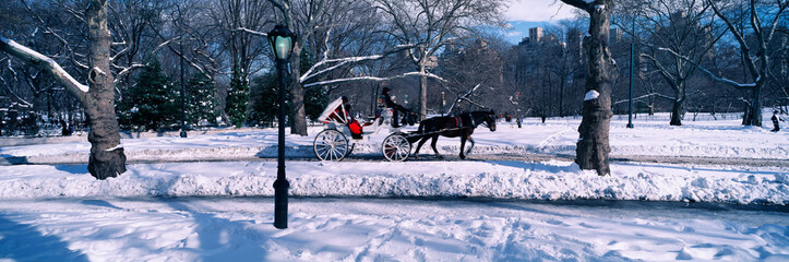Wall Mural - Panoramic view of snowy city street lamps, horse and carriage in Central Park, Manhattan, New York City, NY on a sunny winter day