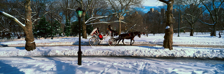 Fototapete - Panoramic view of snowy city street lamps, horse and carriage in Central Park, Manhattan, New York City, NY on a sunny winter day