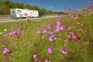 Wall Mural - Pink and purple flowers blooming along interstate highway as trailer drives by