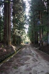 Cedar tree avenue in Nikko city