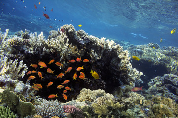 Fototapete - Colorful coral reef with tropical fish