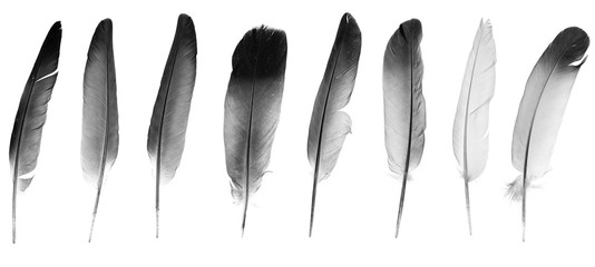 Natural bird feathers isolated on a white background. collage pigeon and goose feathers close-up Fotomurales