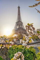 Wall Mural - Eiffel Tower with spring trees against sunrise in Paris, France