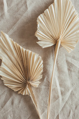 Tan fan craft leaves on beige washed linen cloth. Flat lay, top view.