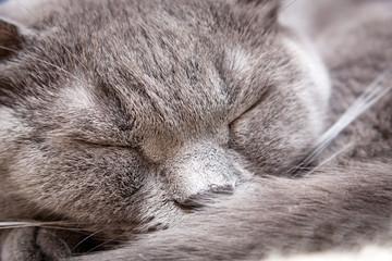 Cat sleeping close up